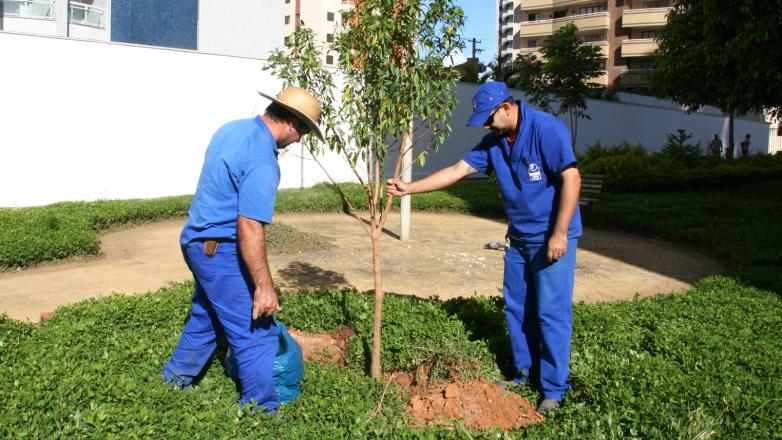 arvore manaca jardim : arvore manaca jardim:Plantio de árvores revitaliza espaços públicos na cidade