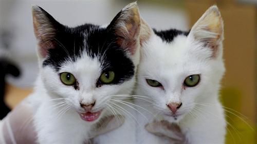 Filhotes de gatos em primeiro plano