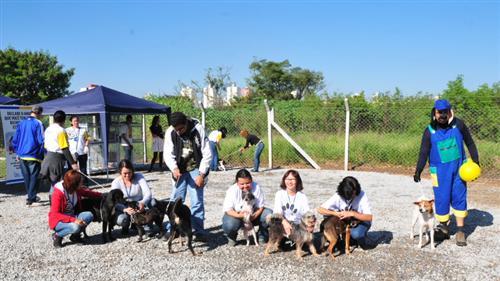 Imagem mostra donos posando com seus cães durante campanha