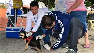 Funcionário aplicando a vacina no cachorro