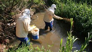 O combate ao pernilongo é realizado com a aplicação mensal de larvicida biológico em córregos, rios e áreas de várzeas