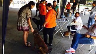 Feira Municipal de Adoção de Animais