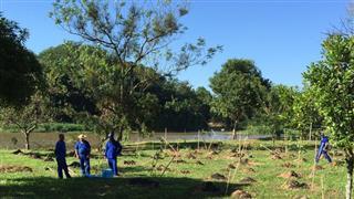 São José terá plantio de mais de 97 mil árvores ainda em 2016