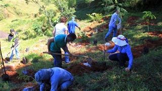 Plantio de mudas de árvores nativas na Fazenda Banco da Serra, em São Francisco Xavier