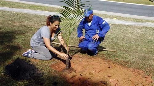 Plantio de mudas na praça entre o Dom Pedro 1º e João Paulo 2º