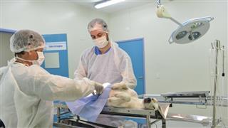 Cão em cirurgia