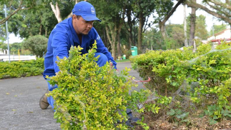 Funcionário da Urbam poda arbusto