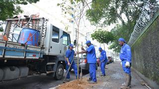 Plantio de mudas na calçada da Avenida Major Antônio Domingues, na região central de São José dos Campos