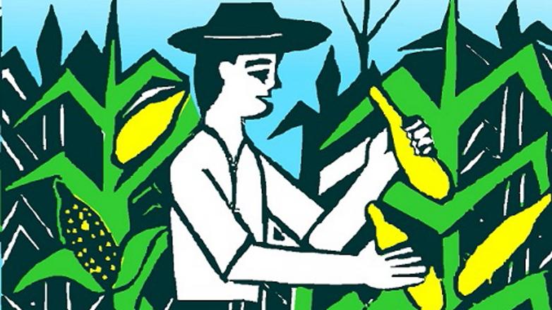 Ilustração: homem colhendo milho