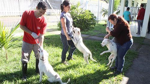 É permitido um período de experiência por 15 dias para avaliação e adaptação do animal aos novos donos e moradia