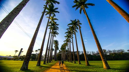 As palmeiras-imperiais são um dos símbolos do Parque da Cidade; o acervo conta com cerca de 200 exemplares, declaradas imunes de corte